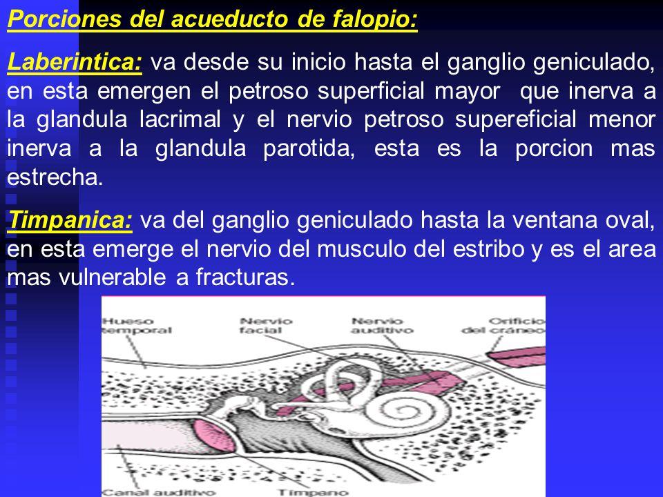 Porciones del acueducto de falopio: Laberintica: va desde su inicio hasta el ganglio geniculado, en esta emergen el petroso superficial mayor que iner