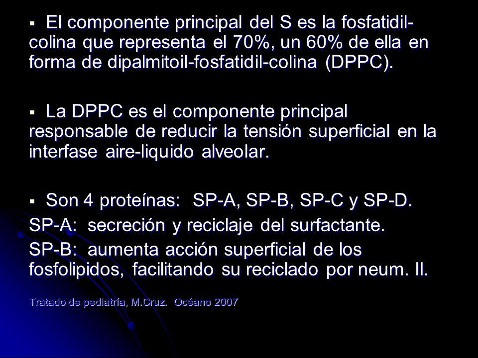 SP-C: aumenta el reciclado de fosfolipidos.