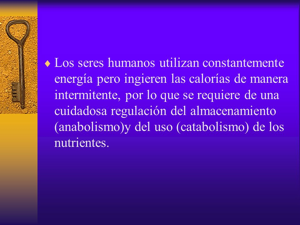 Los seres humanos utilizan constantemente energía pero ingieren las calorías de manera intermitente, por lo que se requiere de una cuidadosa regulació