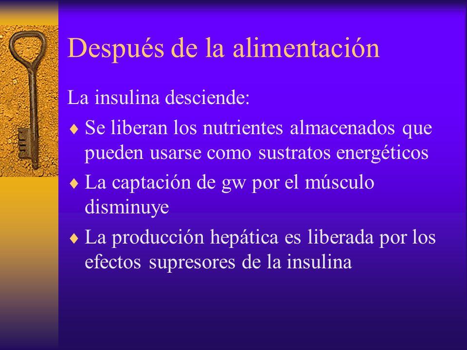 Después de la alimentación La insulina desciende: Se liberan los nutrientes almacenados que pueden usarse como sustratos energéticos La captación de g