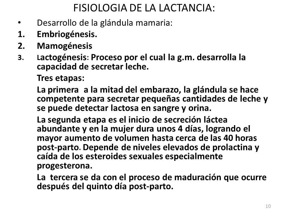 FISIOLOGIA DE LA LACTANCIA: Desarrollo de la glándula mamaria: 1.Embriogénesis. 2.Mamogénesis 3.L actogénesis : Proceso por el cual la g.m. desarrolla
