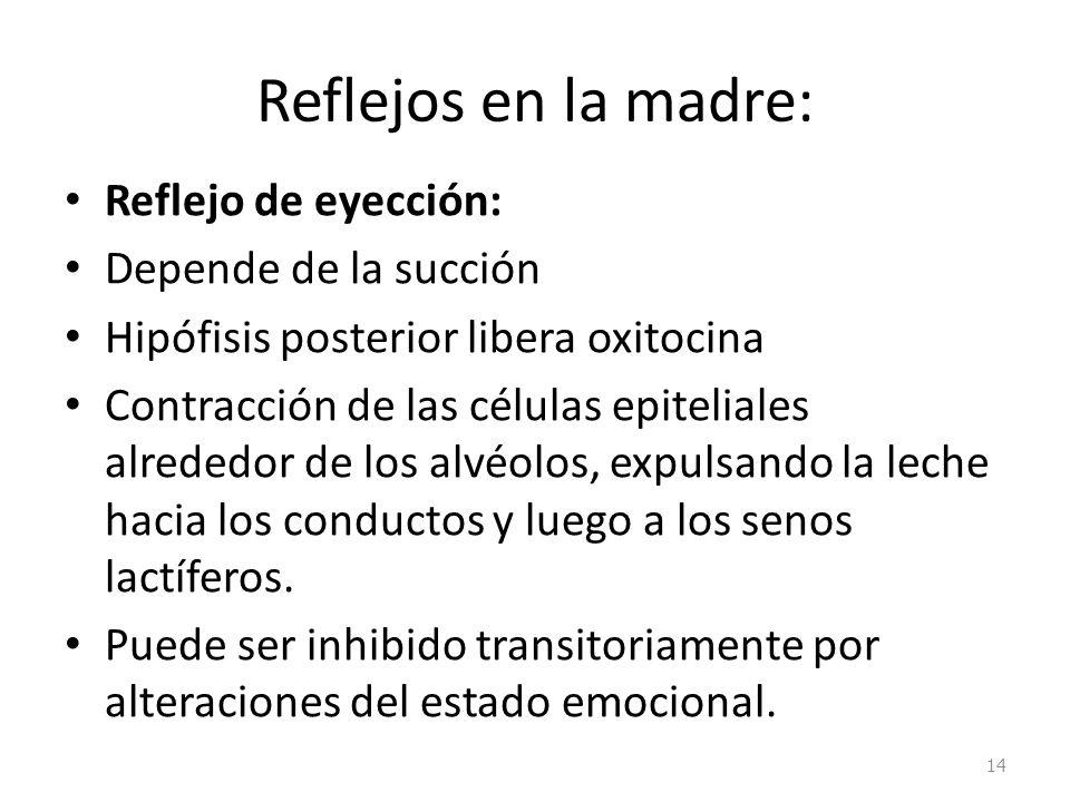 Reflejos en la madre: Reflejo de eyección: Depende de la succión Hipófisis posterior libera oxitocina Contracción de las células epiteliales alrededor