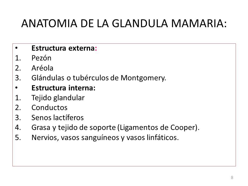 ANATOMIA DE LA GLANDULA MAMARIA: Estructura externa: 1.Pezón 2.Aréola 3.Glándulas o tubérculos de Montgomery. Estructura interna: 1.Tejido glandular 2