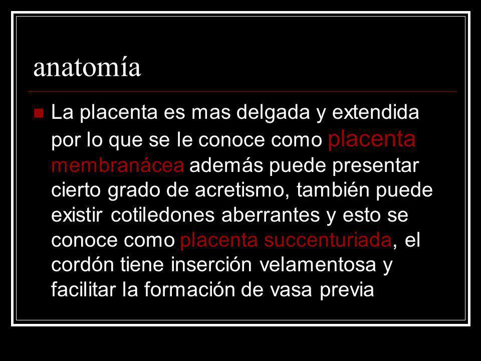 anatomía La placenta es mas delgada y extendida por lo que se le conoce como placenta membranácea además puede presentar cierto grado de acretismo, ta