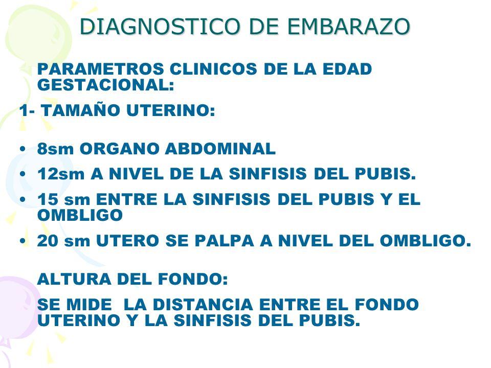 DIAGNOSTICO DE EMBARAZO PARAMETROS CLINICOS DE LA EDAD GESTACIONAL: 1- TAMAÑO UTERINO: 8sm ORGANO ABDOMINAL 12sm A NIVEL DE LA SINFISIS DEL PUBIS. 15