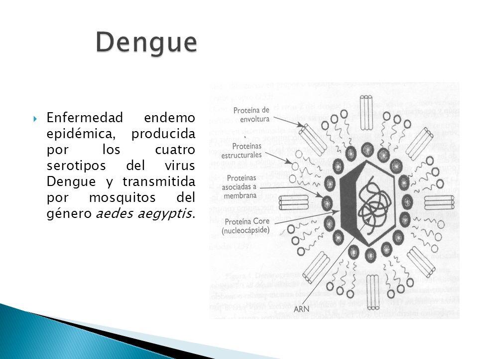 Enfermedad endemo epidémica, producida por los cuatro serotipos del virus Dengue y transmitida por mosquitos del género aedes aegyptis.