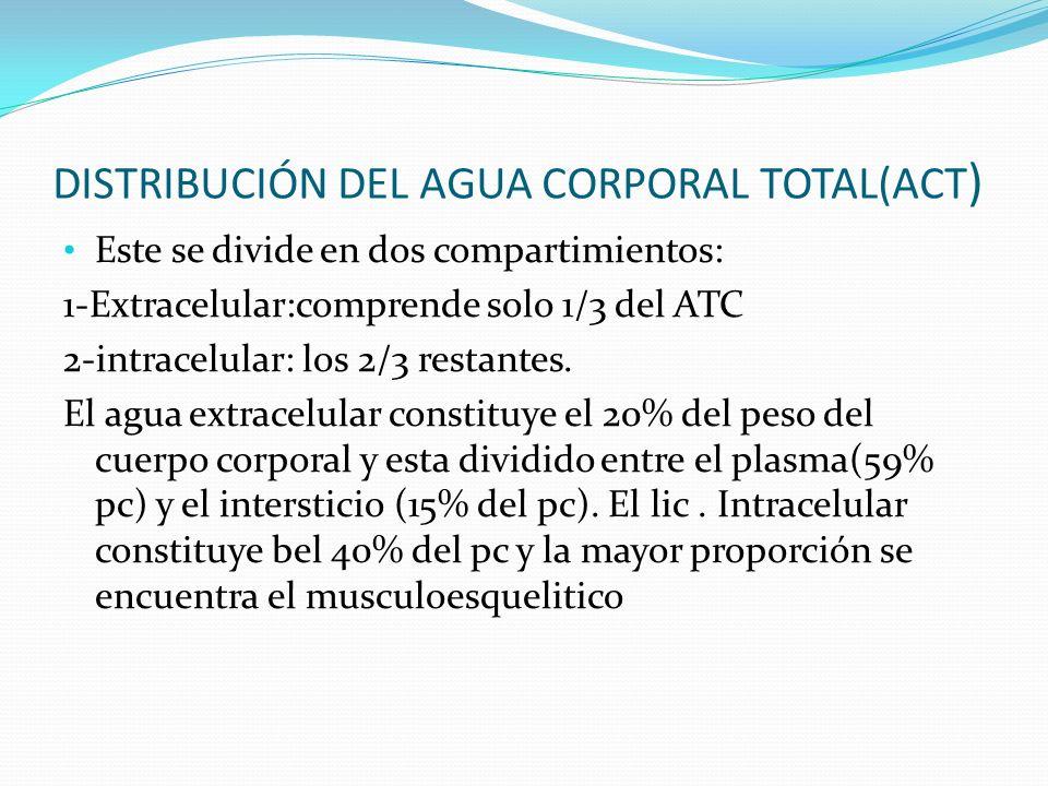 DISTRIBUCIÓN DEL AGUA CORPORAL TOTAL(ACT ) Este se divide en dos compartimientos: 1-Extracelular:comprende solo 1/3 del ATC 2-intracelular: los 2/3 re