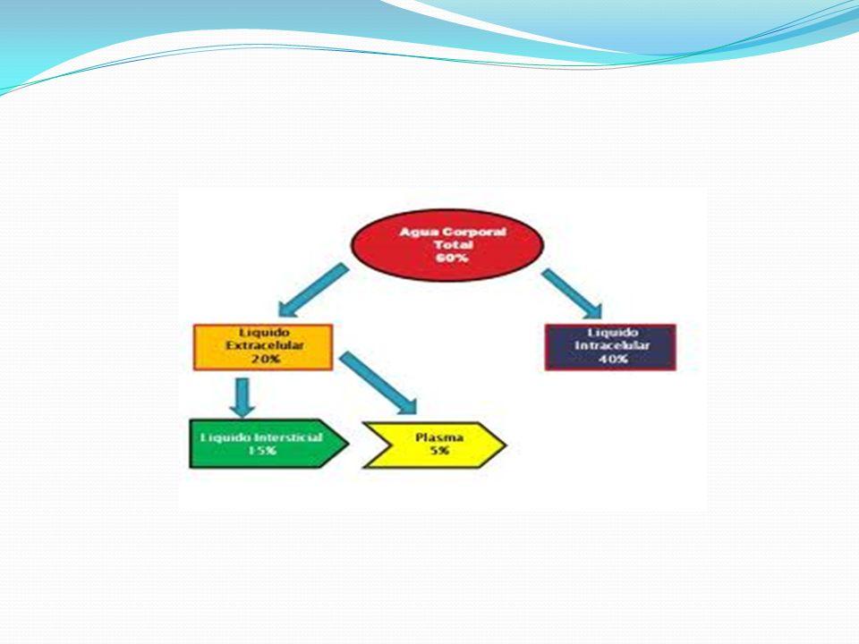 Composicion de las secresiones gastrointestinales Tipo de secresion Volumen m/24hrs Na (meq/L) K (meq/L) CL meq/L Hco3 estomago1000-200060-9010-30100-1300 Intestino delgado 2000-3000120-1405-1090-12030-40 colon603040 pancreas600-800135-1455-1070-9095-115