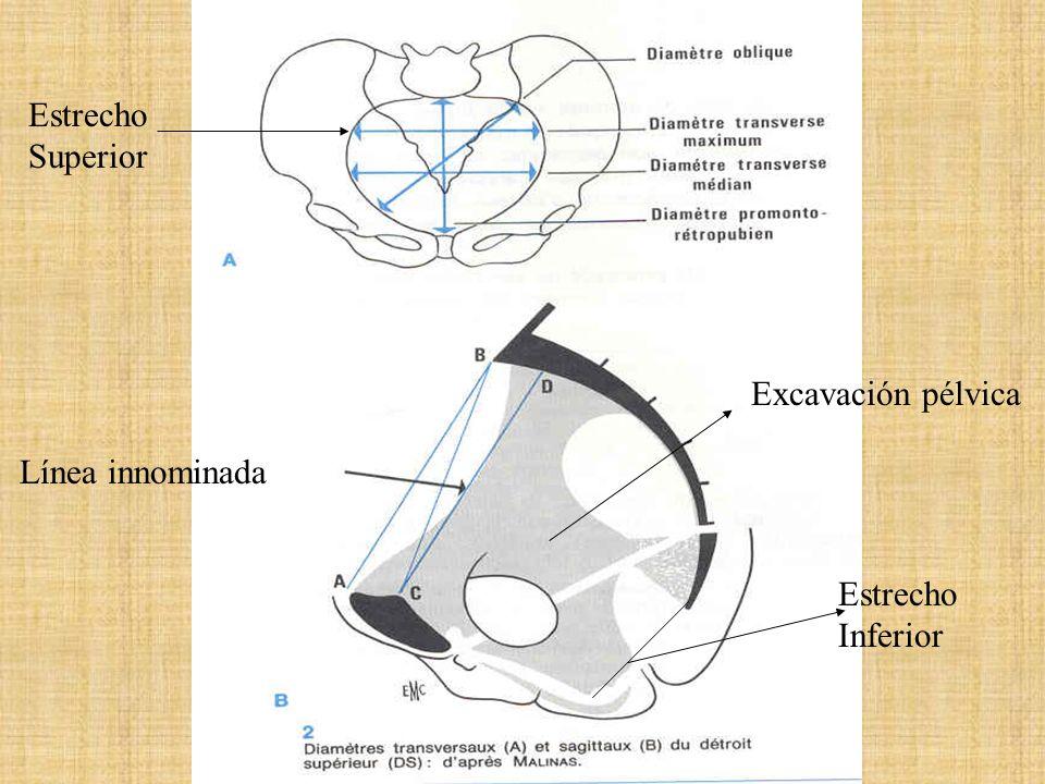 I plano: Promontorio a borde superior sínfisis Púbica.