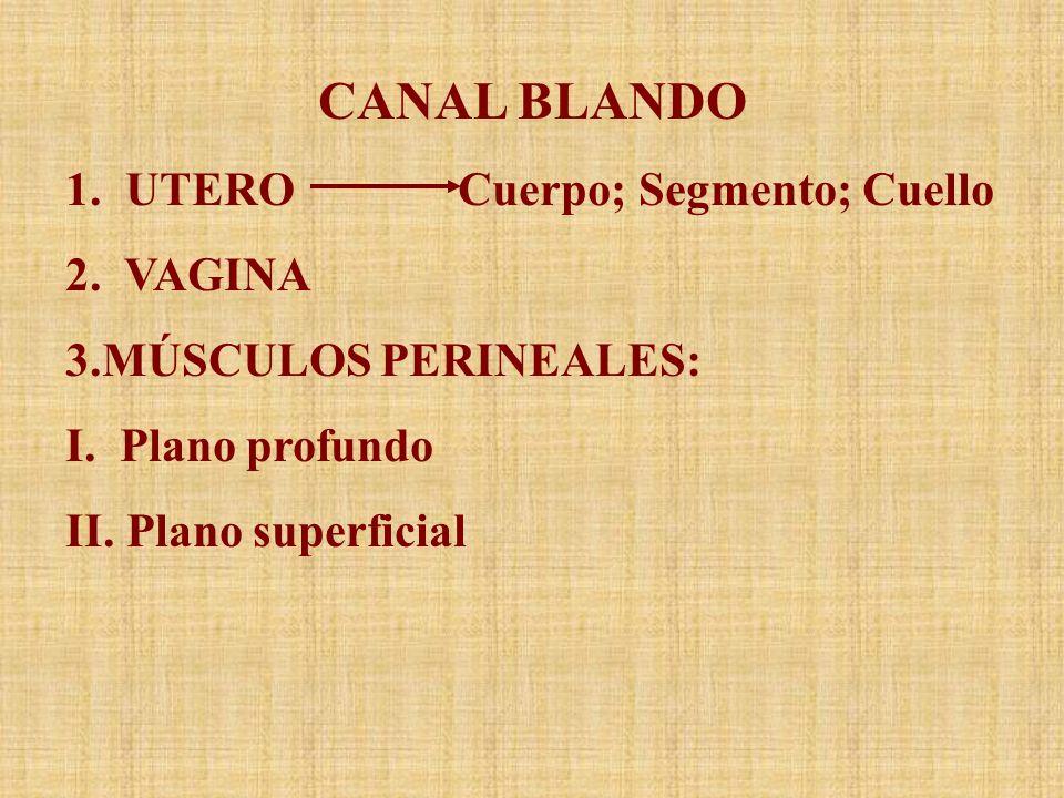 CANAL BLANDO 1. UTERO Cuerpo; Segmento; Cuello 2. VAGINA 3.MÚSCULOS PERINEALES: I. Plano profundo II. Plano superficial