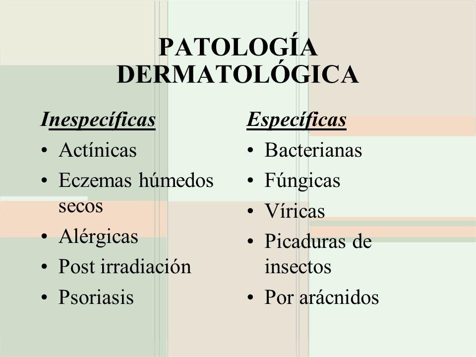 PATOLOGÍA DERMATOLÓGICA Inespecíficas Actínicas Eczemas húmedos secos Alérgicas Post irradiación Psoriasis Específicas Bacterianas Fúngicas Víricas Pi