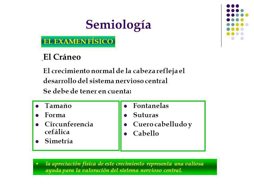 Semiología EL EXAMEN FÍSICO El Cráneo la apreciación física de este crecimiento representa una valiosa ayuda para la valoración del sistema nervioso c