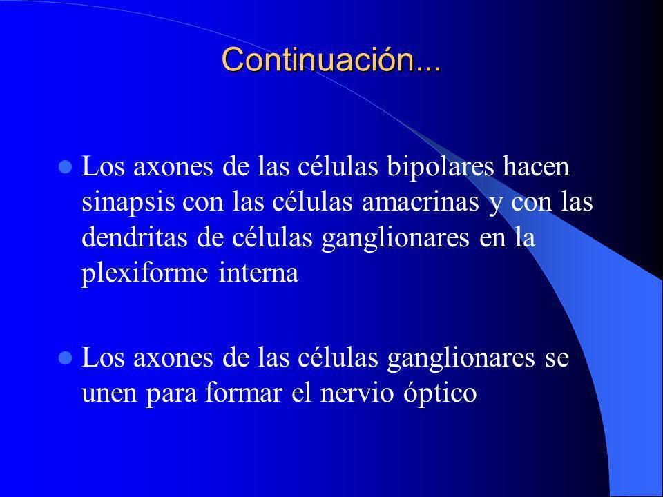 Sinapsis EPR Sinapsis