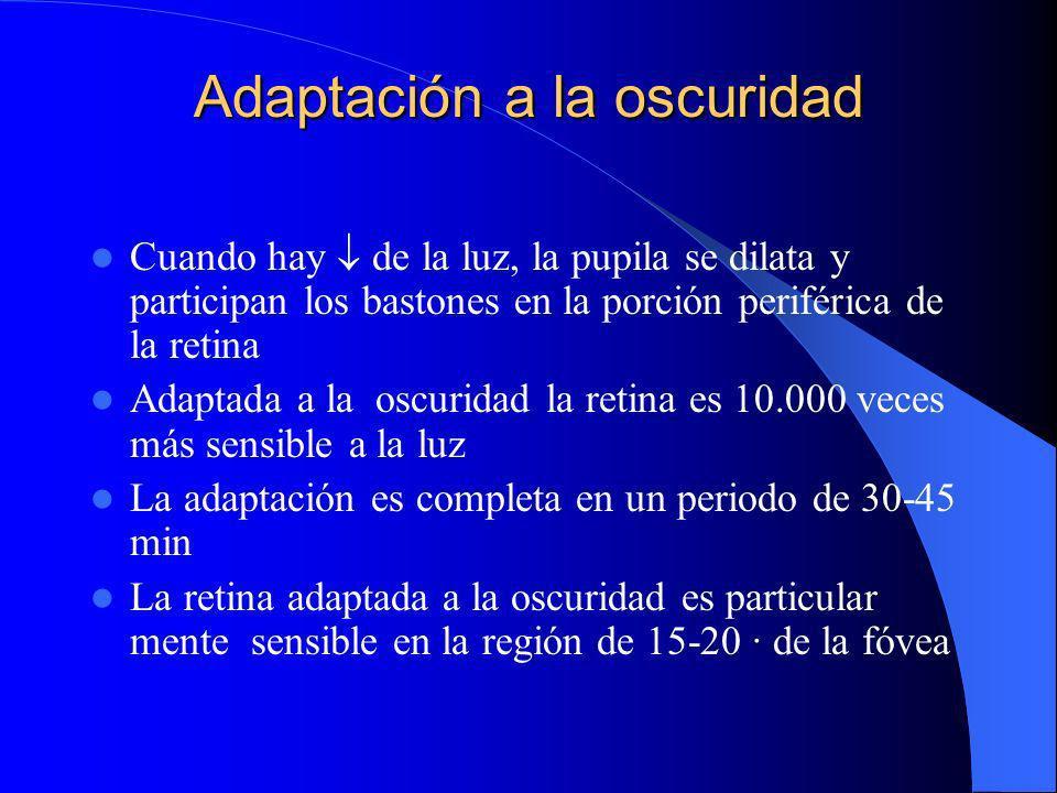 Adaptación a la luz Cuando pasamos de un lugar oscuro a otro con mucha luz, la pupila se contrae Participan los conos en la región central de la retina La adaptación es completa en un minuto