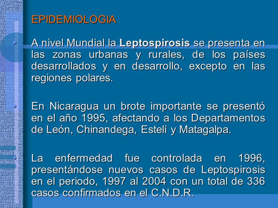 EPIDEMIOLOGIA A nivel Mundial la Leptospirosis se presenta en las zonas urbanas y rurales, de los países desarrollados y en desarrollo, excepto en las