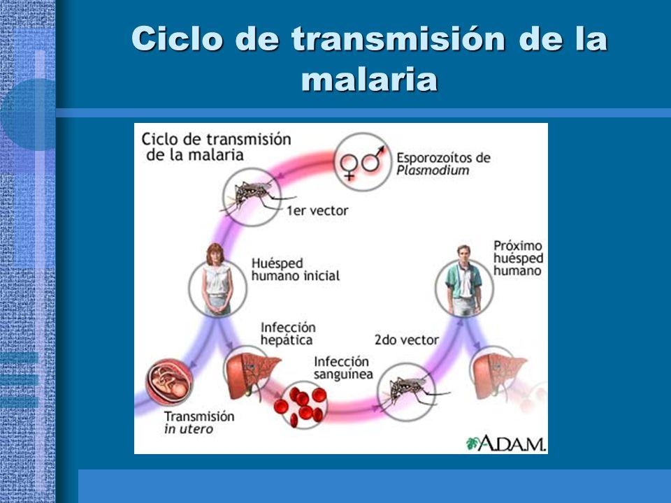 Ciclo de transmisión de la malaria