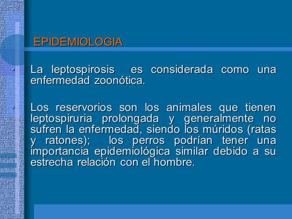 EPIDEMIOLOGIA EPIDEMIOLOGIA La leptospirosis es considerada como una enfermedad zoonótica.La leptospirosis es considerada como una enfermedad zoonótic