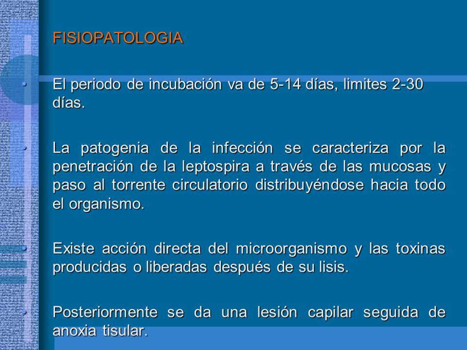 FISIOPATOLOGIA El periodo de incubación va de 5-14 días, limites 2-30 días.El periodo de incubación va de 5-14 días, limites 2-30 días. La patogenia d