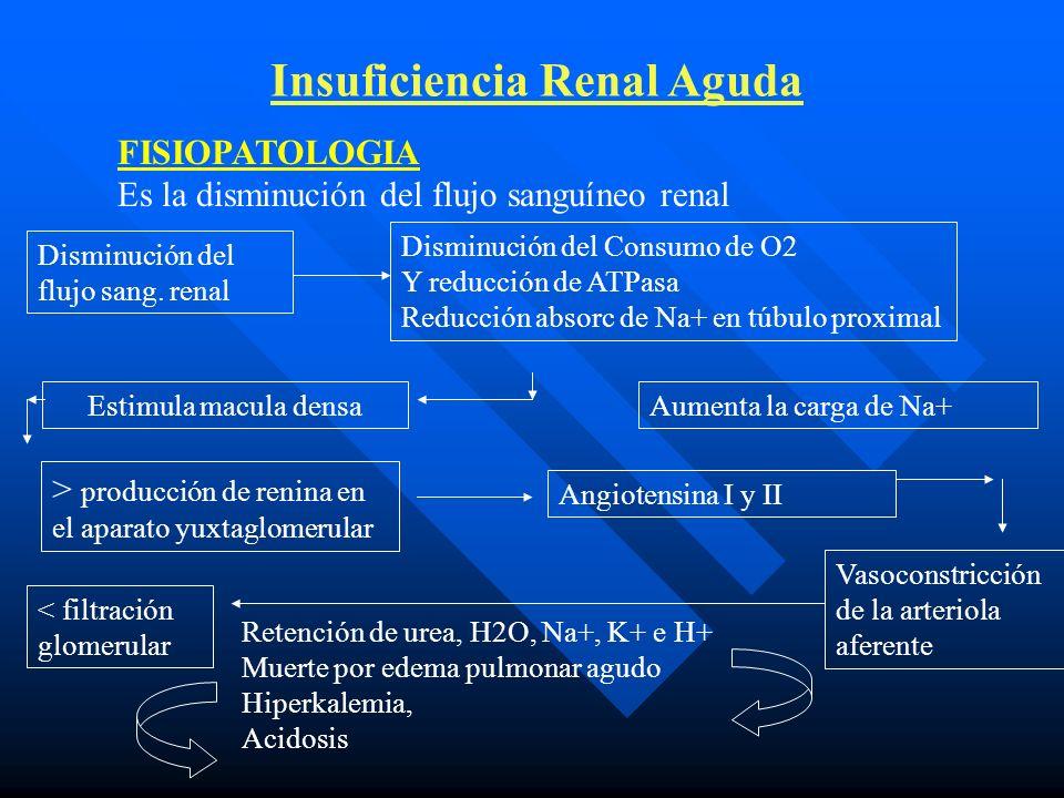 Insuficiencia Renal Aguda Complicaciones: Sobre hidratación Acidosis Hiperkalemia Hipertensión (HT) Convulsiones Edema pulmonar (EP) e infecciones Hipercalcemia + hiperfosfatemia ICC EP HT Encefalopatía Hipertensiva