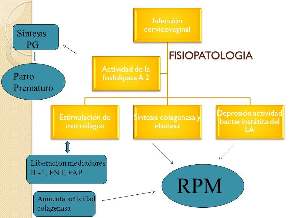 FISIOPATOLOGIA FISIOPATOLOGIA Infección cervicovaginal Estimulación de macrófagos Síntesis colagenasa y elastasa Depresión actividad bacteriostática d
