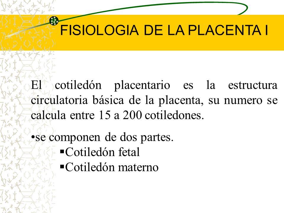 La parte fetal esta formada por vellosidades que al irse uniendo forman los cotiledones. Las vellosidades coriales son la unidad funcional de la place