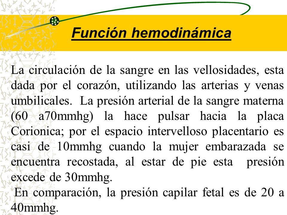 El cotiledón placentario es la estructura circulatoria básica de la placenta, su numero se calcula entre 15 a 200 cotiledones. se componen de dos part