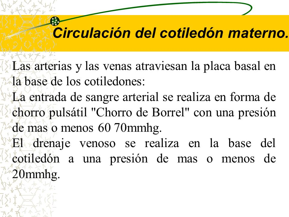 La circulación de la sangre en las vellosidades, esta dada por el corazón, utilizando las arterias y venas umbilicales. La presión arterial de la sang