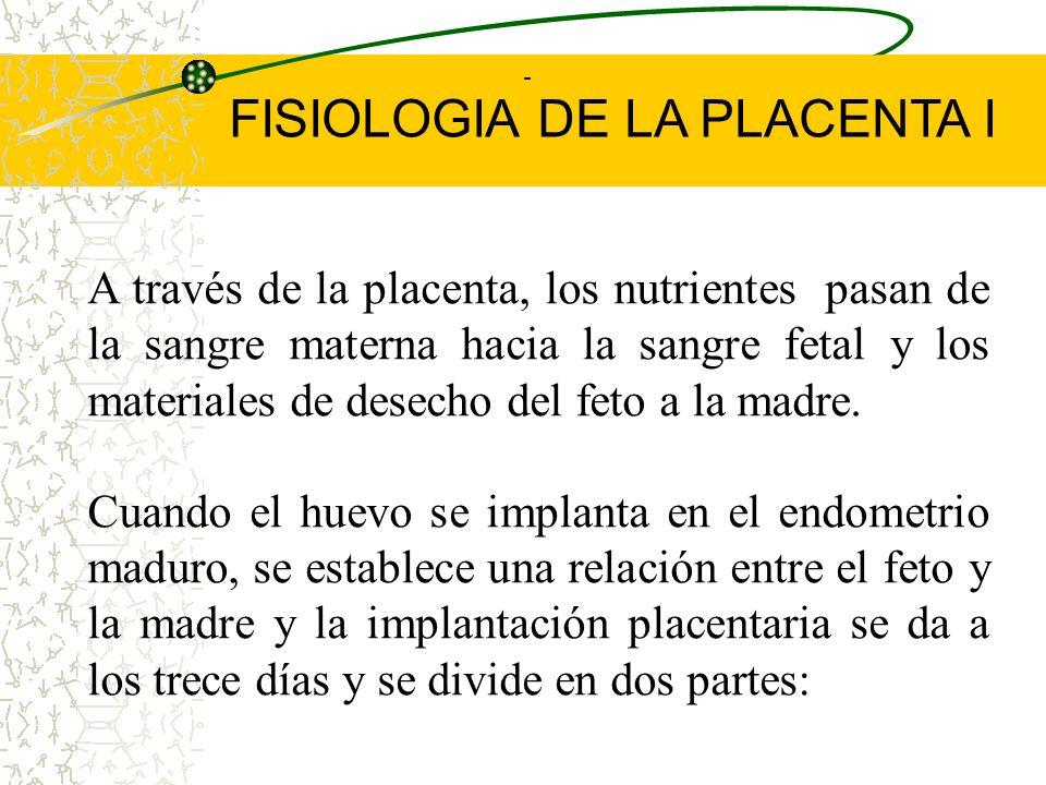 La placenta es un órgano feto materno con dos componentes: a.- Porción fetal grande que se desarrolla del saco coriónico y forma el corion frondoso. b