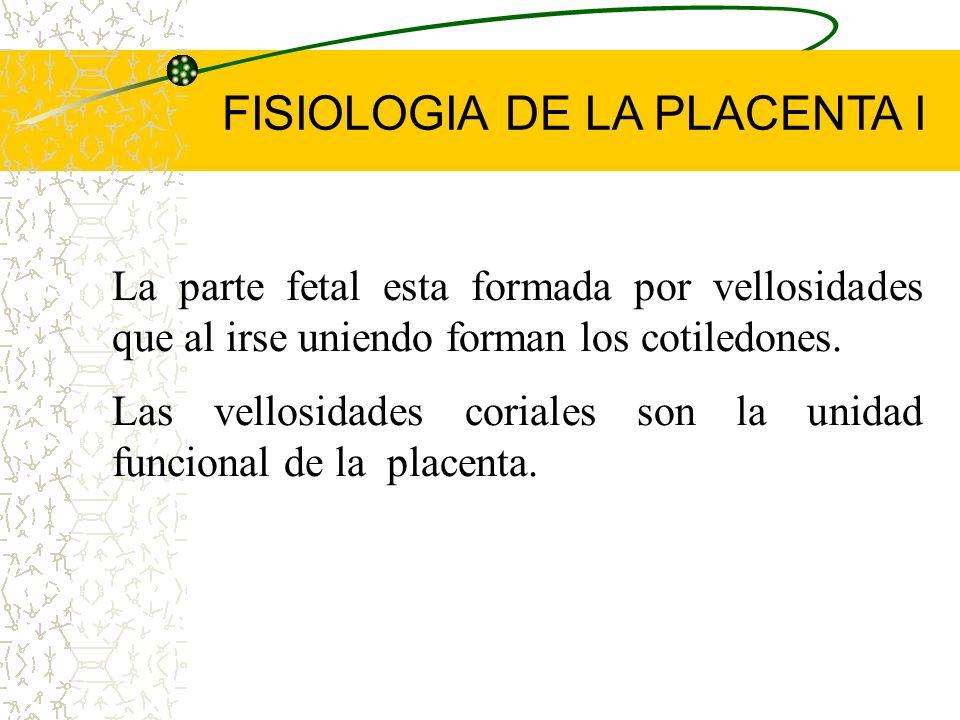 FUNCIONES DE LA PLACENTA: Protección Nutrición (Intercambio materno fetal) Respiración Metabólica Producción de hormonas (Endocrina) Función hemodinám