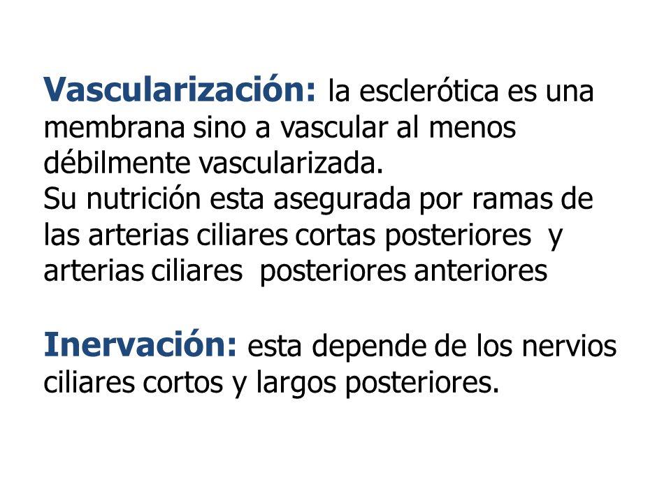 Vascularización: la esclerótica es una membrana sino a vascular al menos débilmente vascularizada. Su nutrición esta asegurada por ramas de las arteri