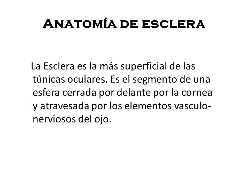 Anatomía de esclera La Esclera es la más superficial de las túnicas oculares. Es el segmento de una esfera cerrada por delante por la cornea y atraves