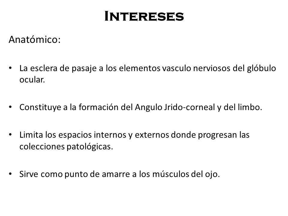 Intereses Anatómico: La esclera de pasaje a los elementos vasculo nerviosos del glóbulo ocular. Constituye a la formación del Angulo Jrido-corneal y d