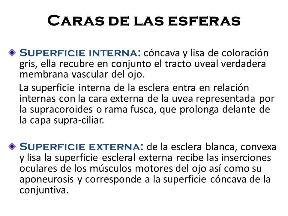 Abertura y orificio ABERTURA Posterior Anterior 11-12mm Cornea Cabeza del nervio óptico 1.5mm