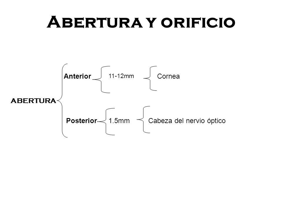 ORIFICIO Anterior Medio Posterior Arterias ciliares anteriores Venas Vorticosas Arterias-venas y nervios Ciliares cortos y largos posteriores.
