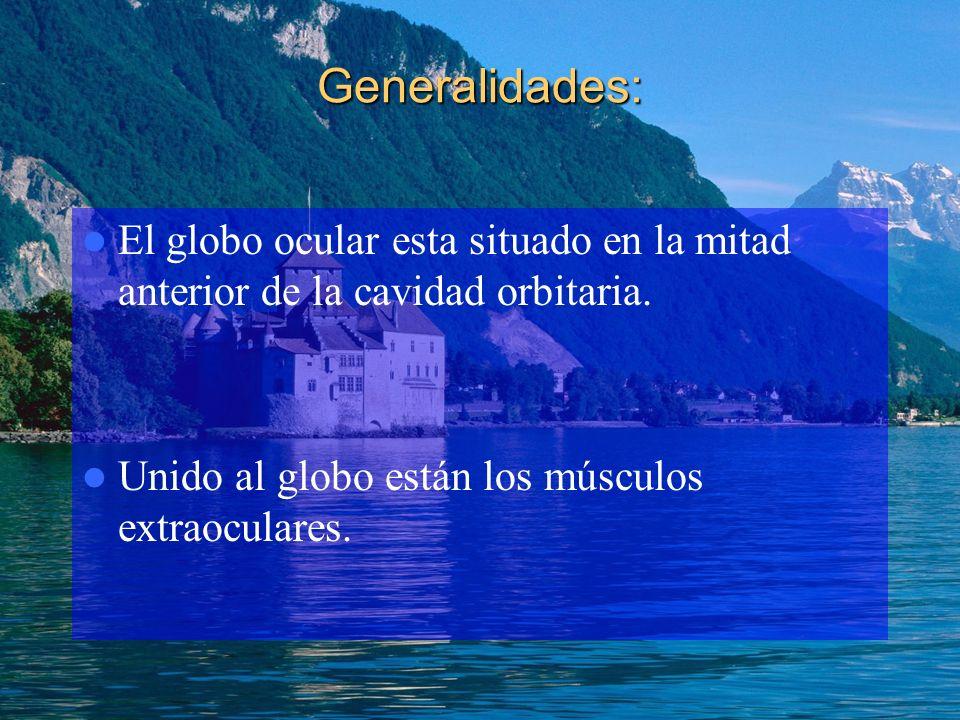 Generalidades: El globo ocular esta situado en la mitad anterior de la cavidad orbitaria. Unido al globo están los músculos extraoculares.
