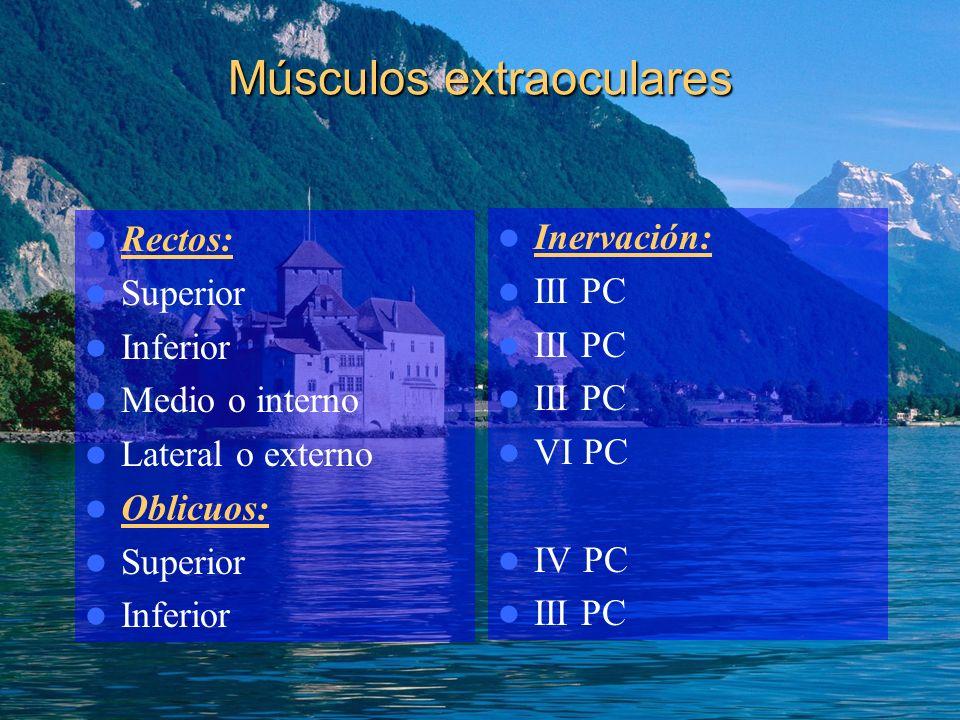 Músculos extraoculares Rectos: Superior Inferior Medio o interno Lateral o externo Oblicuos: Superior Inferior Inervación: III PC VI PC IV PC III PC