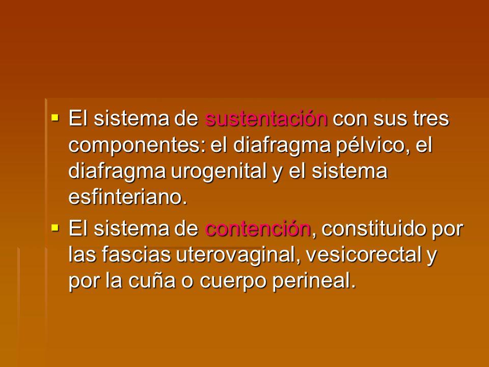 El sistema de sustentación con sus tres componentes: el diafragma pélvico, el diafragma urogenital y el sistema esfinteriano. El sistema de sustentaci