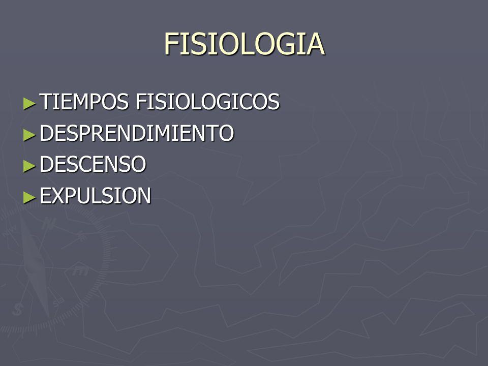 FISIOLOGIA TIEMPOS FISIOLOGICOS TIEMPOS FISIOLOGICOS DESPRENDIMIENTO DESPRENDIMIENTO DESCENSO DESCENSO EXPULSION EXPULSION