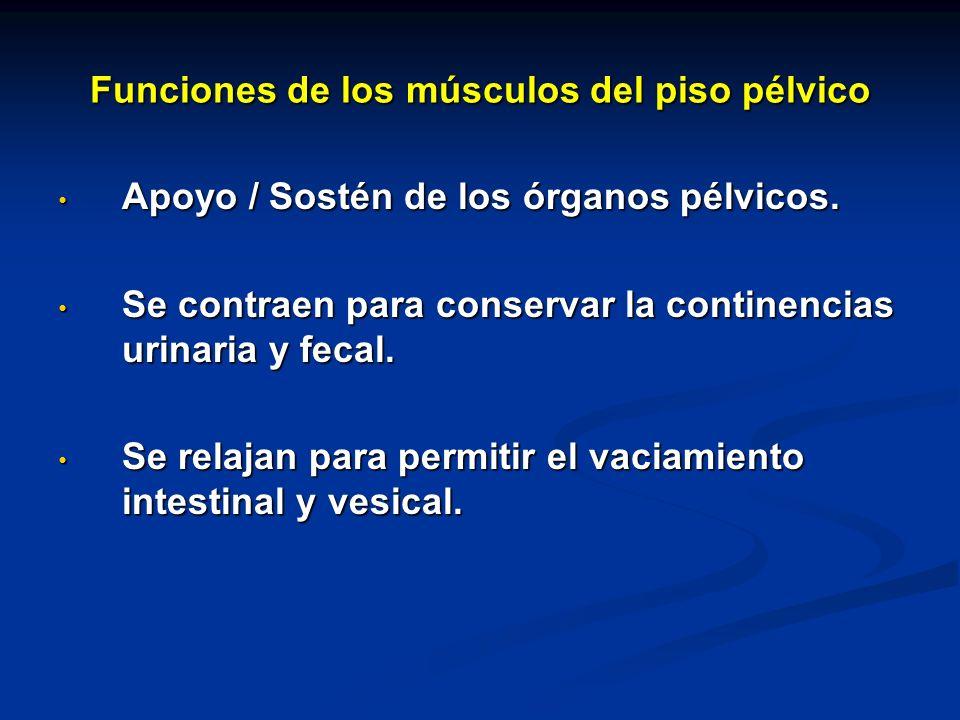 Funciones de los músculos del piso pélvico Apoyo / Sostén de los órganos pélvicos. Apoyo / Sostén de los órganos pélvicos. Se contraen para conservar