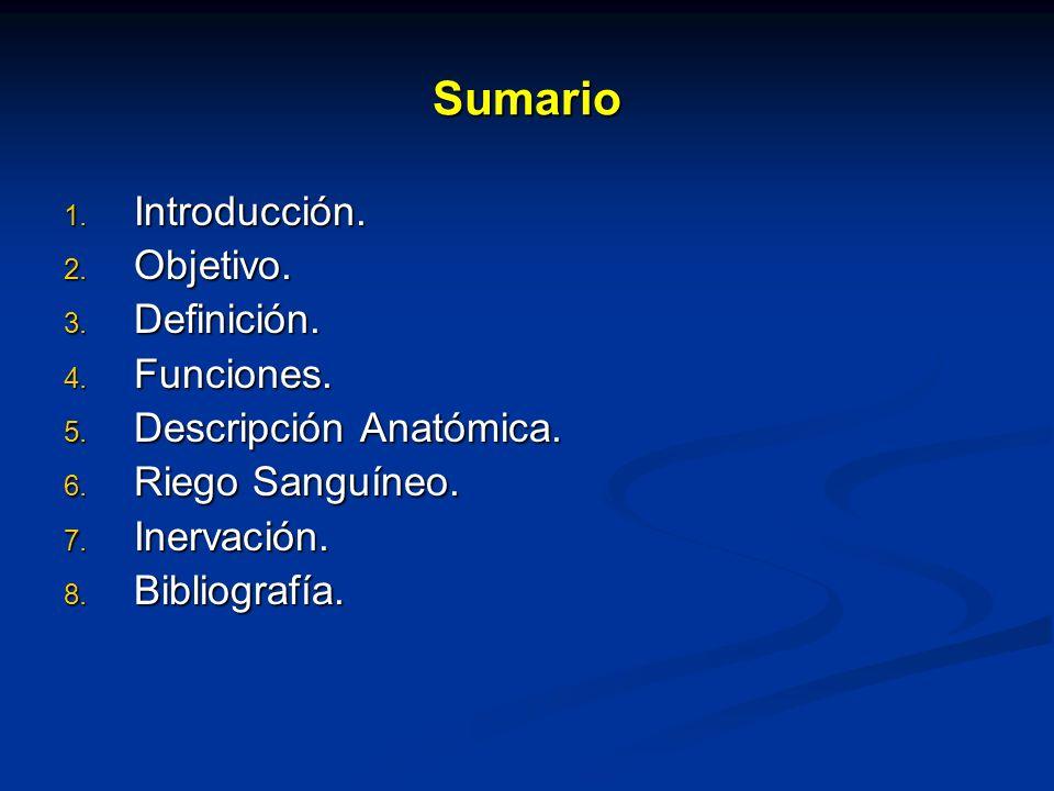 Sumario 1. Introducción. 2. Objetivo. 3. Definición. 4. Funciones. 5. Descripción Anatómica. 6. Riego Sanguíneo. 7. Inervación. 8. Bibliografía.