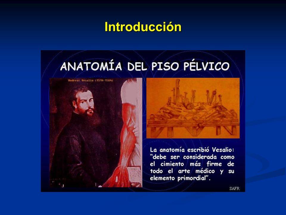 Art.Hipogástrica Ramo posterior : Ramo posterior : art.