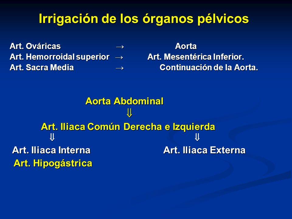 Irrigación de los órganos pélvicos Art. Ováricas Aorta Art. Ováricas Aorta Art. Hemorroidal superior Art. Mesentérica Inferior. Art. Hemorroidal super