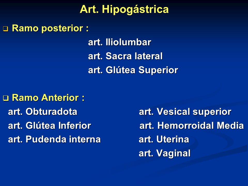 Art. Hipogástrica Ramo posterior : Ramo posterior : art. Iliolumbar art. Iliolumbar art. Sacra lateral art. Sacra lateral art. Glútea Superior art. Gl