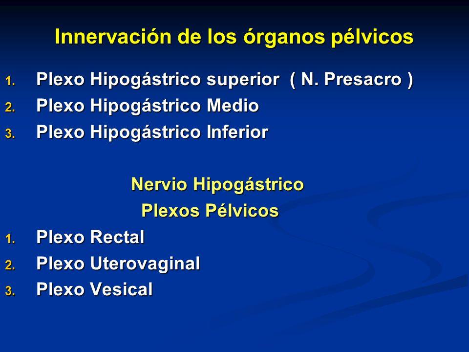 Innervación de los órganos pélvicos 1. Plexo Hipogástrico superior ( N. Presacro ) 2. Plexo Hipogástrico Medio 3. Plexo Hipogástrico Inferior Nervio H