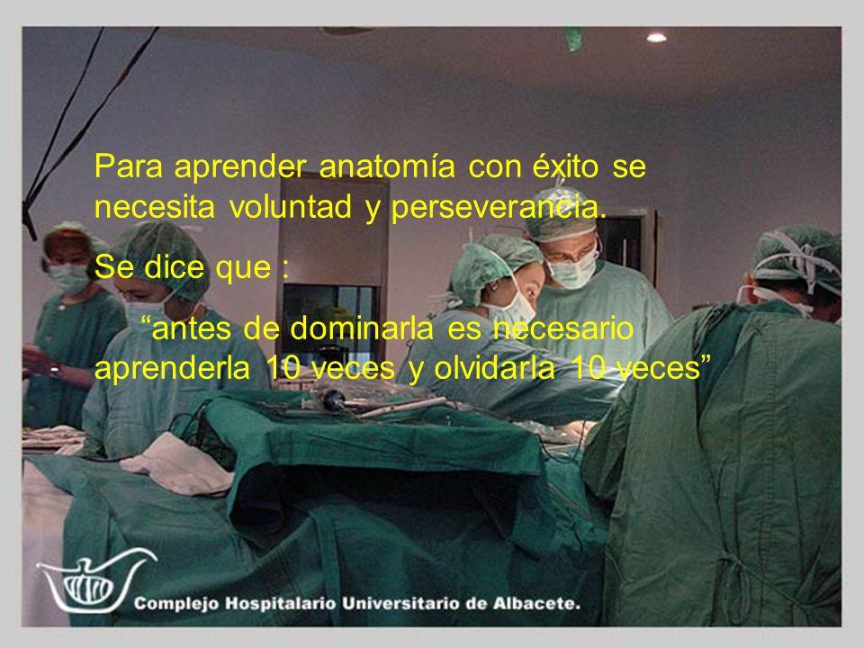 Para aprender anatomía con éxito se necesita voluntad y perseverancia.