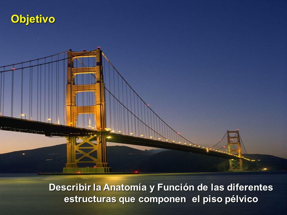 Objetivo Describir la Anatomía y Función de las diferentes estructuras que componen el piso pélvico