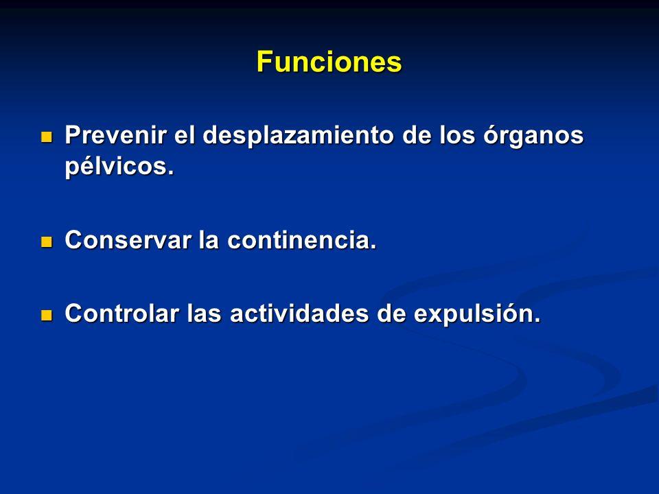 Funciones Prevenir el desplazamiento de los órganos pélvicos. Prevenir el desplazamiento de los órganos pélvicos. Conservar la continencia. Conservar