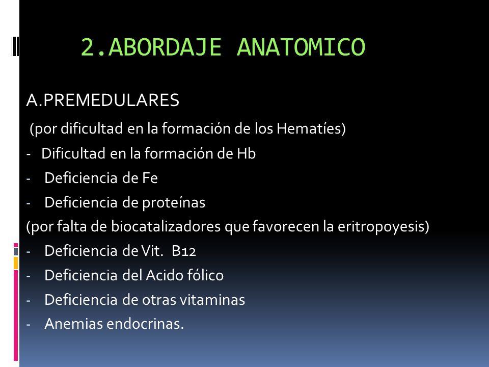 2.ABORDAJE ANATOMICO A.PREMEDULARES (por dificultad en la formación de los Hematíes) - Dificultad en la formación de Hb - Deficiencia de Fe - Deficien