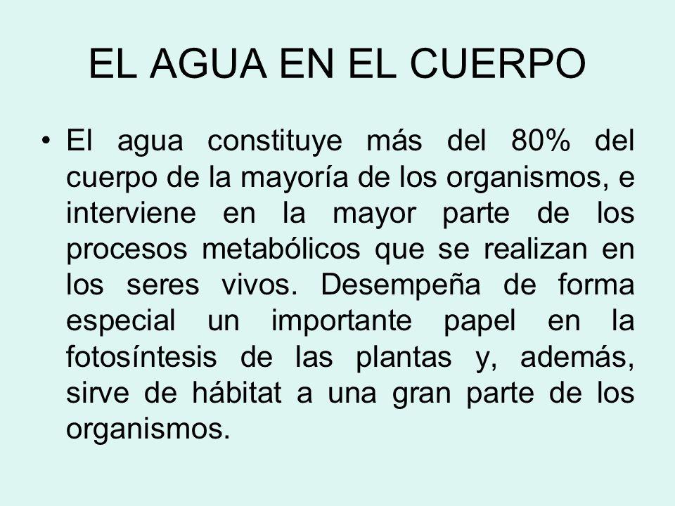 EL AGUA EN EL CUERPO El agua constituye más del 80% del cuerpo de la mayoría de los organismos, e interviene en la mayor parte de los procesos metabólicos que se realizan en los seres vivos.