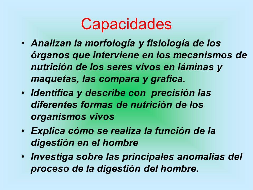 Capacidades Analizan la morfología y fisiología de los órganos que interviene en los mecanismos de nutrición de los seres vivos en láminas y maquetas,